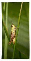 Beach Towel featuring the photograph Meadow Grasshopper by Jouko Lehto
