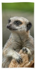Meerkat Model Beach Towel