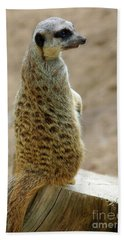 Meerkat Portrait Beach Towel