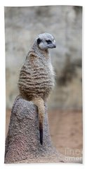 Meerkat Sitting And Looking Right Beach Towel