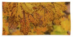 Michigan Autumn  Beach Towel