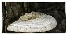 Beach Sheet featuring the photograph Michigantree Fungi by LeeAnn McLaneGoetz McLaneGoetzStudioLLCcom