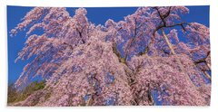 Beach Sheet featuring the photograph Miharu Takizakura Weeping Cherry30 by Tatsuya Atarashi