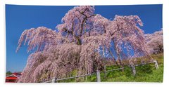 Beach Sheet featuring the photograph Miharu Takizakura Weeping Cherry0565 by Tatsuya Atarashi