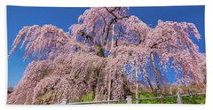 Beach Towel featuring the photograph Miharu Takizakura Weeping Cherry31 by Tatsuya Atarashi
