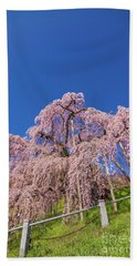 Beach Towel featuring the photograph Miharu Takizakura Weeping Cherry32 by Tatsuya Atarashi