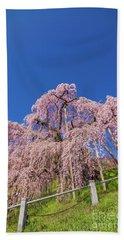 Beach Sheet featuring the photograph Miharu Takizakura Weeping Cherry32 by Tatsuya Atarashi