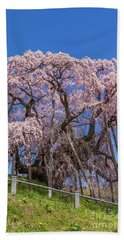 Beach Towel featuring the photograph Miharu Takizakura Weeping Cherry55 by Tatsuya Atarashi