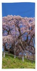 Beach Sheet featuring the photograph Miharu Takizakura Weeping Cherry55 by Tatsuya Atarashi