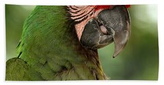 Military Macaw Beach Sheet