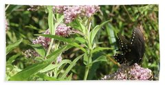 Male American Swallowtail Papilio Polyxenes Beach Towel