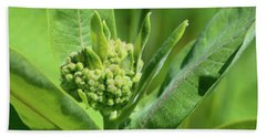 Beach Towel featuring the photograph Milkweed Flower  by Lyle Crump