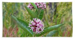 Beach Towel featuring the photograph Milkweed In Bloom by Ann E Robson