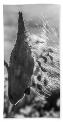 Milkweed Pod Back Lit B And W Beach Sheet