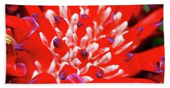Beach Towel featuring the photograph Flaming Torch Bromeliad By Kaye Menner by Kaye Menner