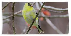 Beach Towel featuring the photograph Molting Gold Finch Square by Bill Wakeley