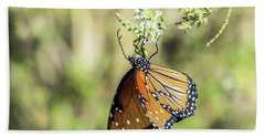 Monarch Butterfly 7504-101017-2cr Beach Towel