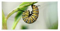 Monarch Caterpillar On Succulent Plant Photo Beach Towel