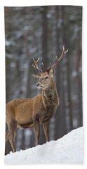 Monarch Of The Woods Beach Towel