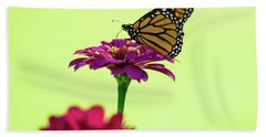 Monarch On A Zinnia Beach Towel