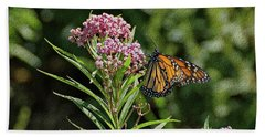 Beach Towel featuring the photograph Monarch On Milkweed by Sandy Keeton