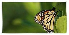 Monarch Stare Beach Sheet