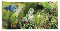 Beach Towel featuring the photograph Monk Parakeets Feeding On Evergreens 2 by William Selander