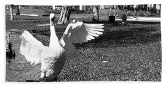 Monochrome Flapping Swan Beach Sheet