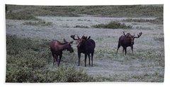 Moose Cameron Pass Co Beach Towel