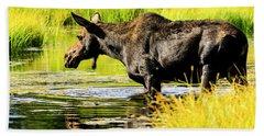 Moose At Jackson Hole Beach Sheet