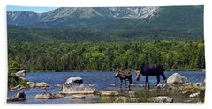 Moose Baxter State Park Maine 2 Beach Towel