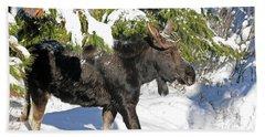 Moose In Snow Beach Towel