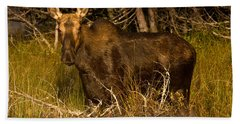 Moose Of Prong Pond Beach Towel