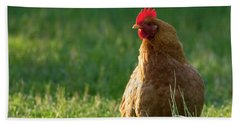 Morning Chicken Beach Sheet