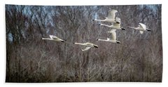 Morning Flight Of Tundra Swan Beach Towel
