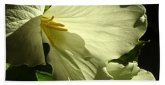 Morning Light - Trillium Beach Sheet