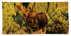 Morning Moose Beach Towel