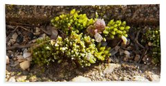 Moss And Pebbles Beach Towel