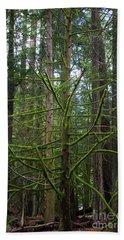Moss Covered Tree Beach Sheet
