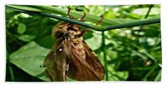 Moth At Rest Beach Towel