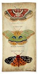 Moth Study Beach Towel