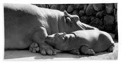 Mother And Baby Hippos Beach Towel
