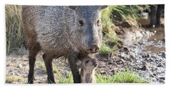 Mother And Baby Javelina Beach Towel