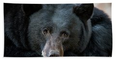 Mother Bear Beach Towel by Mitch Shindelbower
