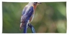Mother Bluebird Beach Sheet