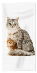 Mother Cat And Ginger Kitten Beach Towel