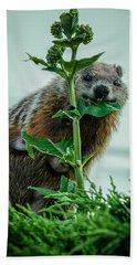 Mother Groundhog Fine Dining Beach Towel by Bob Orsillo