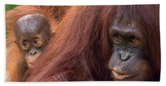 Mother Orangutan With Baby Beach Sheet by John Black