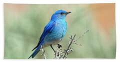 Mountain Bluebird Beauty Beach Towel by Mike Dawson
