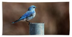 Mountain Bluebird Beach Towel by Eric Nielsen